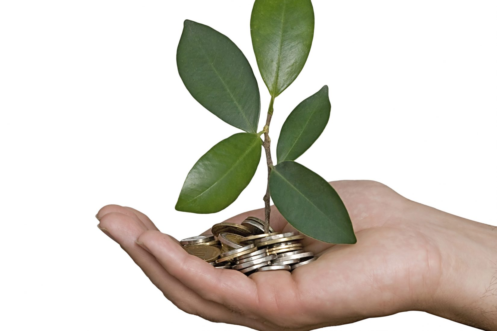 Palm with a plant growng from pile of coins